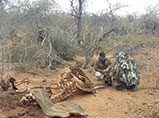 Beside a rhino carcass